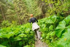 Randonneur dans une forêt Photographie stock libre de droits