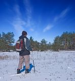 Randonneur dans une forêt de l'hiver Image stock
