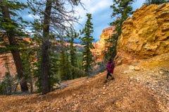 Randonneur de femme trimardant en bas du canyon Bryce National de Ponderosa Image libre de droits