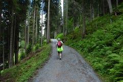 Randonneur de forêt de montagne Image stock