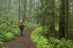 Randonneur du nord-ouest Pacifique de forêt Photographie stock libre de droits
