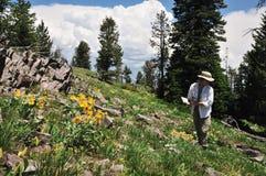 Randonneur et wildflowers Photo stock