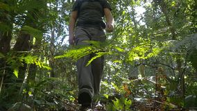 Randonneur extérieur d'aventure avec la nature l'explorant de région sauvage de sac à dos banque de vidéos