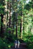 Randonneurs de forêt de cèdre Images stock