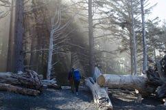 Randonneurs entrant dans la forêt image libre de droits
