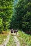 Randonneurs sur la route entrant dans une forêt de montagne photos libres de droits