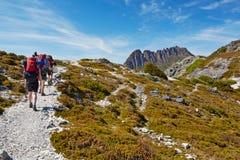 Randonneurs sur la traînée sur terre, montagne de berceau, Tasmanie Image stock