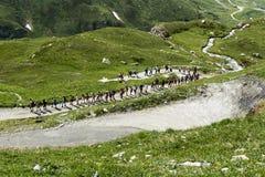 Randonneurs sur le chemin de montagne, Val d'Aoste Images libres de droits