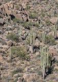 Randonneurs sur le sentier de randonnée de désert à Scottsdale du nord, Arizona photo libre de droits