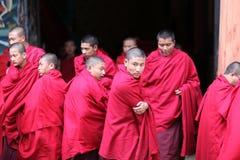 Rane pescarici, Bhutan Immagini Stock
