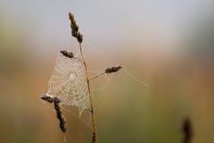 Ranek łąka