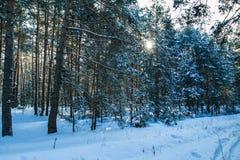 Ranek śnieżnej lasowej zimy słońca mrozowy promień fotografia stock