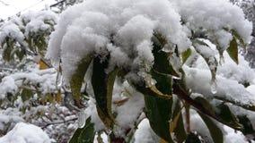 ranek śnieżny obrazy stock