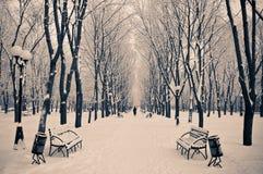ranek śnieżny Zdjęcia Royalty Free