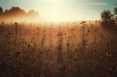 Ranek światło słoneczne Zdjęcie Royalty Free