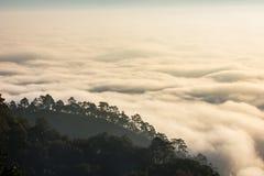 Ranek góra i mgła Obrazy Stock