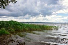 Ranek jezioro, trzcina na jeziorze obraz royalty free