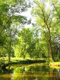 ranek lato Zdjęcia Stock