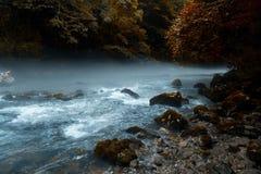Ranek mgła nad góry rzeka po środku zielonego lasu Obrazy Royalty Free