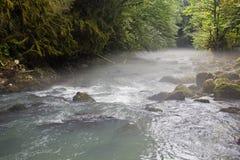 Ranek mgła nad góry rzeka po środku zielonego lasu Zdjęcia Royalty Free