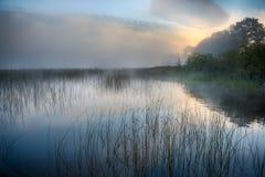 Ranek mgła przy wschodem słońca obrazy royalty free