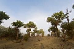 Ranek mgła Tarim rzeka fotografia royalty free