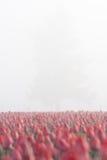 ranek mgłowy drzewo Zdjęcie Stock
