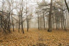 ranek mgłowy park fotografia stock
