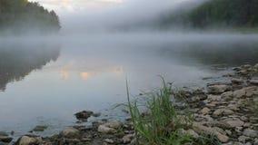 Ranek mgły ruchy wolno nad rzeka przepływ przeciw lasowi zbiory wideo