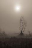Ranek mgła Obraz Royalty Free