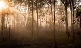 Ranek mgła 6 fotografia royalty free