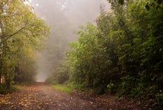 Ranek mgła na wiejskiej drodze Zdjęcia Royalty Free