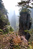ranek mgłowe góry Obrazy Stock