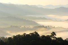 Ranek mgła w dolinie Obrazy Stock