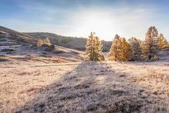 Ranek mgła w górach Hoarfrost na trawie i drzewach Obrazy Stock