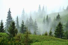 Ranek mgła w lesie Fotografia Royalty Free