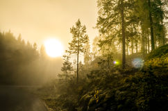 Ranek mgła w norweskim fjord i drewno krajobrazie Zdjęcie Stock