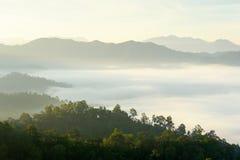 Ranek mgła w zwartym tropikalnym tropikalnym lesie deszczowym Obrazy Stock