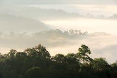 Ranek mgła w zwartym tropikalnym tropikalnym lesie deszczowym Zdjęcia Royalty Free