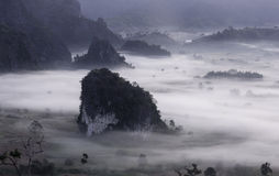 Ranek mgły pokrywy góra Przy Phu Lang Ka i drzewo Fotografia Royalty Free