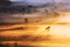 Ranek mgły pokrywy góra Przy Phu Lang Ka i drzewo Obrazy Stock