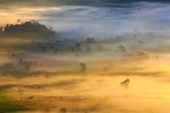 Ranek mgły pokrywy góra Przy Phu Lang Ka i drzewo Obraz Stock