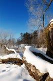 ranek mroźna zima Zdjęcia Royalty Free