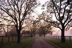 Ranek na gospodarstwie rolnym fotografia royalty free