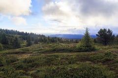 Ranek na plateau, Norwegia Obrazy Stock