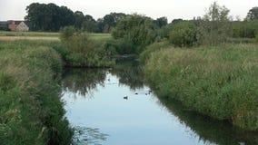Ranek na rzece Świeży ranek z promieniami słońce Ranek Czerwiec otaczał drzewami rzeka zbiory wideo