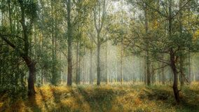 ranek naturar lasem zdjęcia royalty free