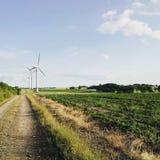 Ranek przy pięknym truskawki gospodarstwem rolnym Fotografia Royalty Free