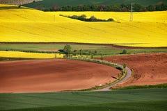 Ranek przy zielonymi i żółtymi wiosen polami zdjęcia royalty free