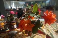 Ranek róże Zdjęcie Royalty Free